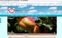 网站运营seo